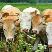 MEWA lifts ban on livestock imports from Spain and Albania